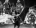 Rodeo 9-14-2013 Gordonsville, VA